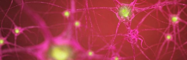 neurons-33